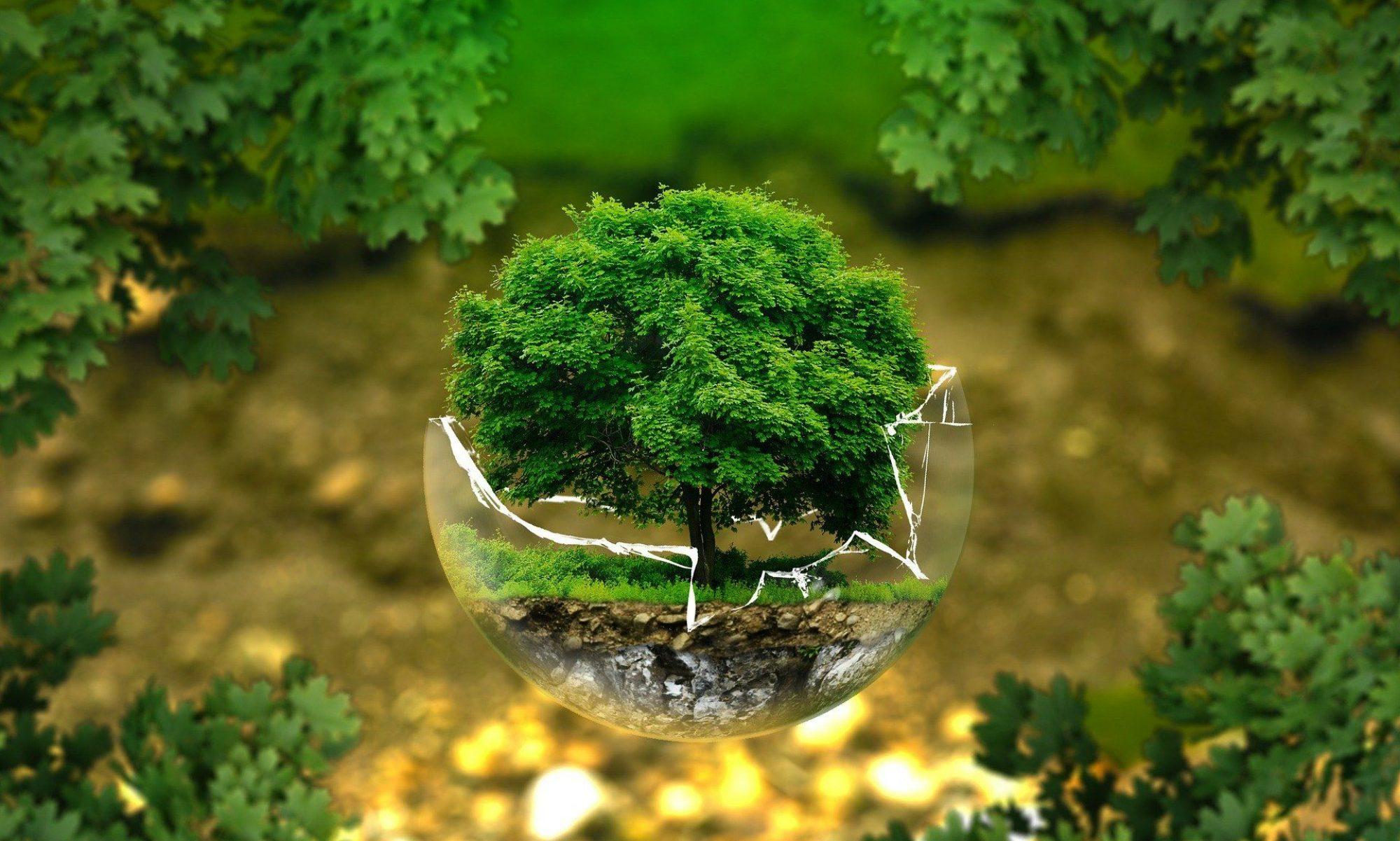 Miljøjagten